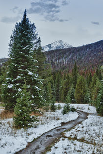First snow in the Rocky mountains forest.  by Irina Moskalev
