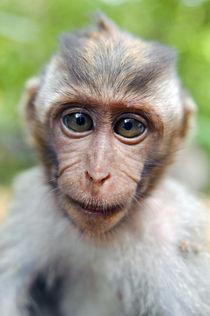 Baby monkey von Alexey Galyzin