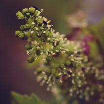 Beetles in vine flower by Nathalie Knovl