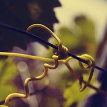Tendril cork-screw by Nathalie Knovl