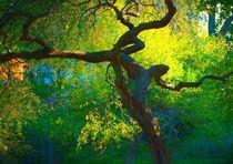 Portraiture of a tree by Maks Erlikh