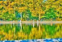 Fall in Central park by Maks Erlikh