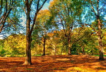 Fall in Central park by Maks Erlikh