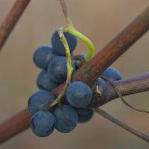 Small grape by Nathalie Knovl