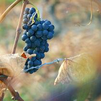 Winter grape by Nathalie Knovl