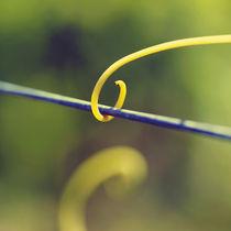 Tendril wire by Nathalie Knovl