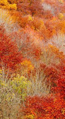 Natural Fall Fire  by Maciej Markiewicz