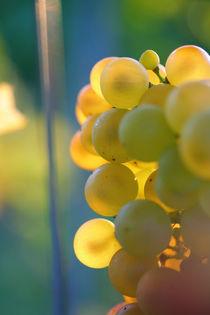 sunset grape by Nathalie Knovl