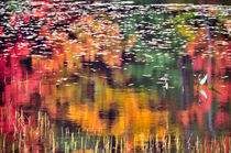 Autumn Reflections by Betty LaRue