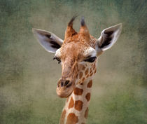 Portrait of a Baby Giraffe by Louise Heusinkveld