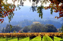Napa California field of Grape Vines by Brian  Leng