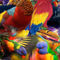 Birds-and-colors