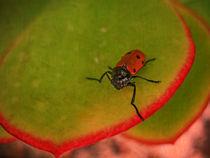 Red Beetle von pahit