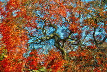 Studies of fall trees. Japanese present to USA by Maks Erlikh
