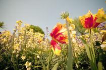 Flowers von jpphotographie