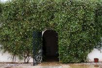 door to promises von Maria Victoria Anelli