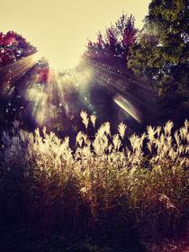 capture a ray of light von Maria Victoria Anelli