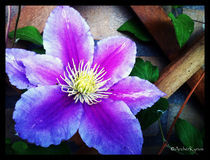 Flower Rack by Renzo Roso