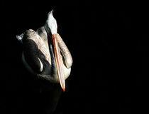 pelican_III von André Zeischold