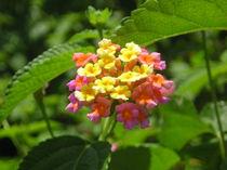 [Zanzibar] - Colourfull flower von Dave ten Hoope
