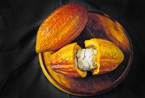 Cocoa fruit Mazorca de cacao von Juan Carlos Lopez