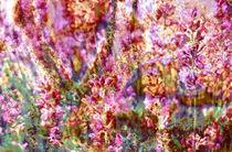 Gartenlust by Maria-Anna  Ziehr