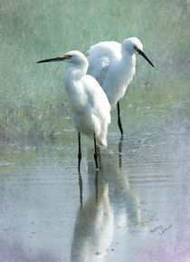 Great Egrets von Betty LaRue
