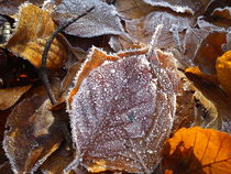 Frozen leaves by Jörgen  Sangsta