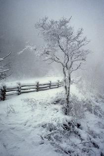 Serene snow by Paul Segsworth