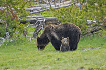 Grizzly Bear Mother and Child by Barbara Magnuson & Larry Kimball