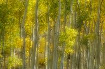 An Aspen Grove von Barbara Magnuson & Larry Kimball