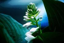 Flower by Agnieszka  Grodzka