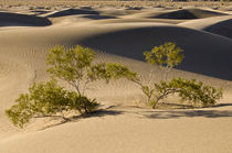 Death Valley Dunes by Barbara Magnuson & Larry Kimball