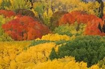 Autumn by Barbara Magnuson & Larry Kimball