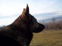 The best friend  by Davor Vrbicic