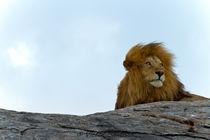 Lion King von Víctor Bautista