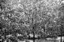 Gnubier1213-rain1003