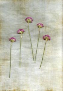 Five von Anne Staub