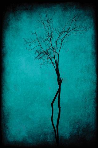 Treetextureblueannestaub