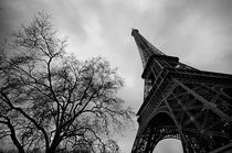 Eiffel Tower with tree, Paris by luisgarciacraus