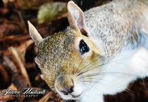 A close squirrel by Jessica Montanelli