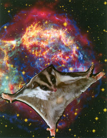 Flying squirrel in the universe von Natasa Stanisic