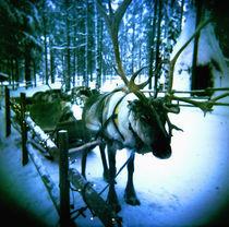 Reindeer by Giorgio Giussani