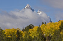 Teton Autumn by Barbara Magnuson & Larry Kimball
