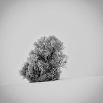 Lonely tree by Eva Stadler