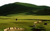 Green Gobi Desert von Carlos Filipe Flores