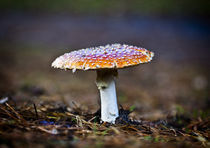 Fly Agaric Toadstool by Graham Prentice