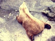 Bear resting by marga-sol
