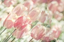 Colored-glas-starlight-tulips
