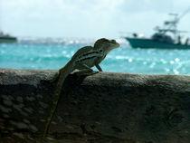 Iguana looks the sea by Adriana Schiavon